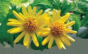 plantas medicinales usos