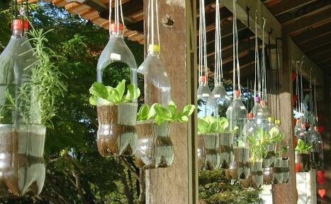 cultivar plantas en casa