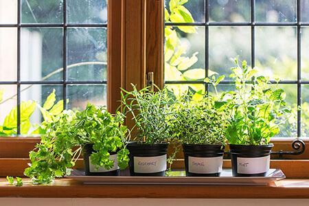 cultivar plantas en la cocina